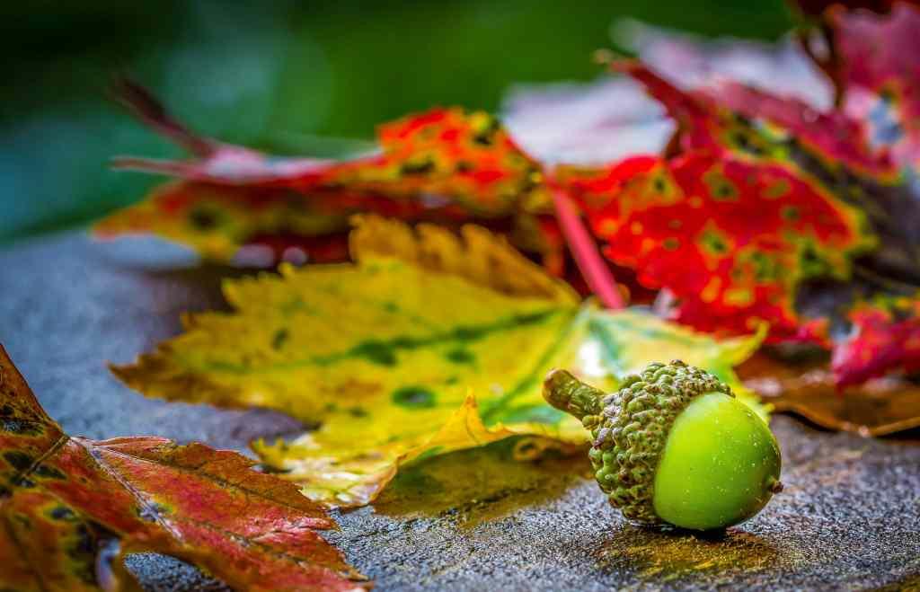 What Your Autumn Landscape Maintenance List Should Include?